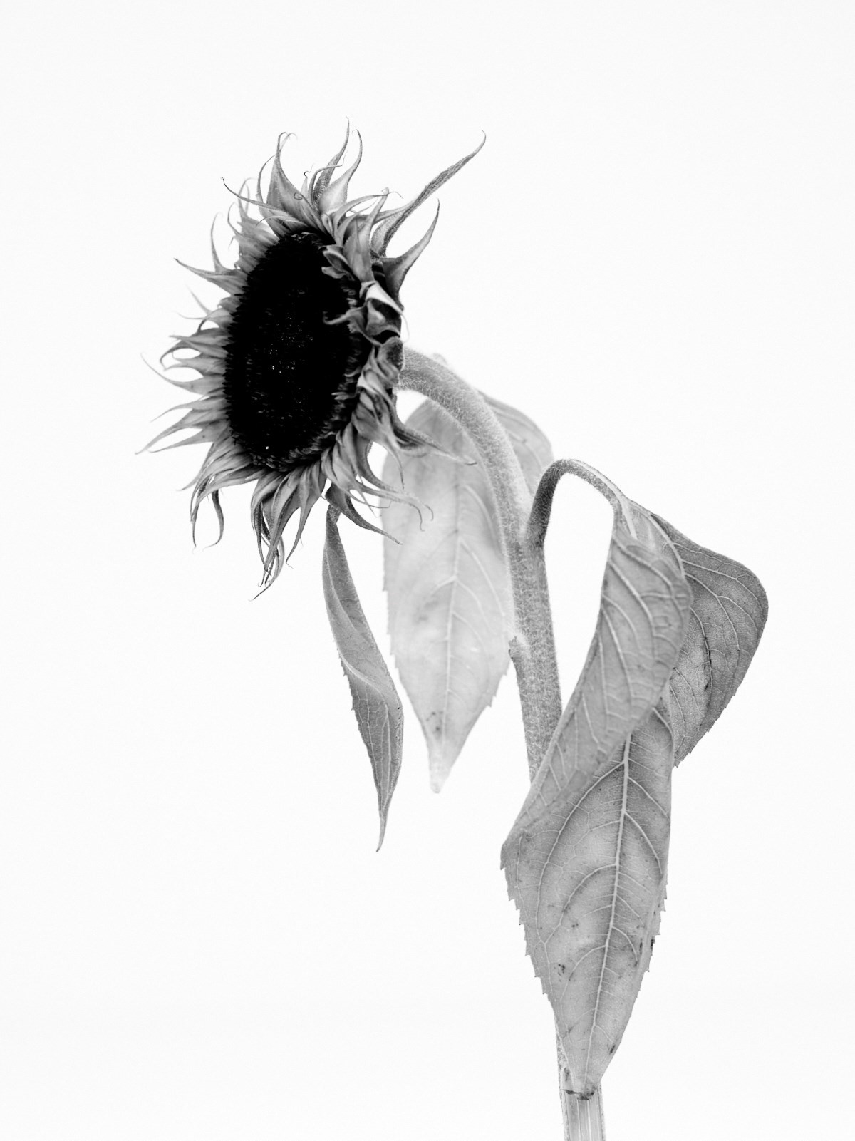 hurt-burn-ruin-and-more-by Willy Vanderperre